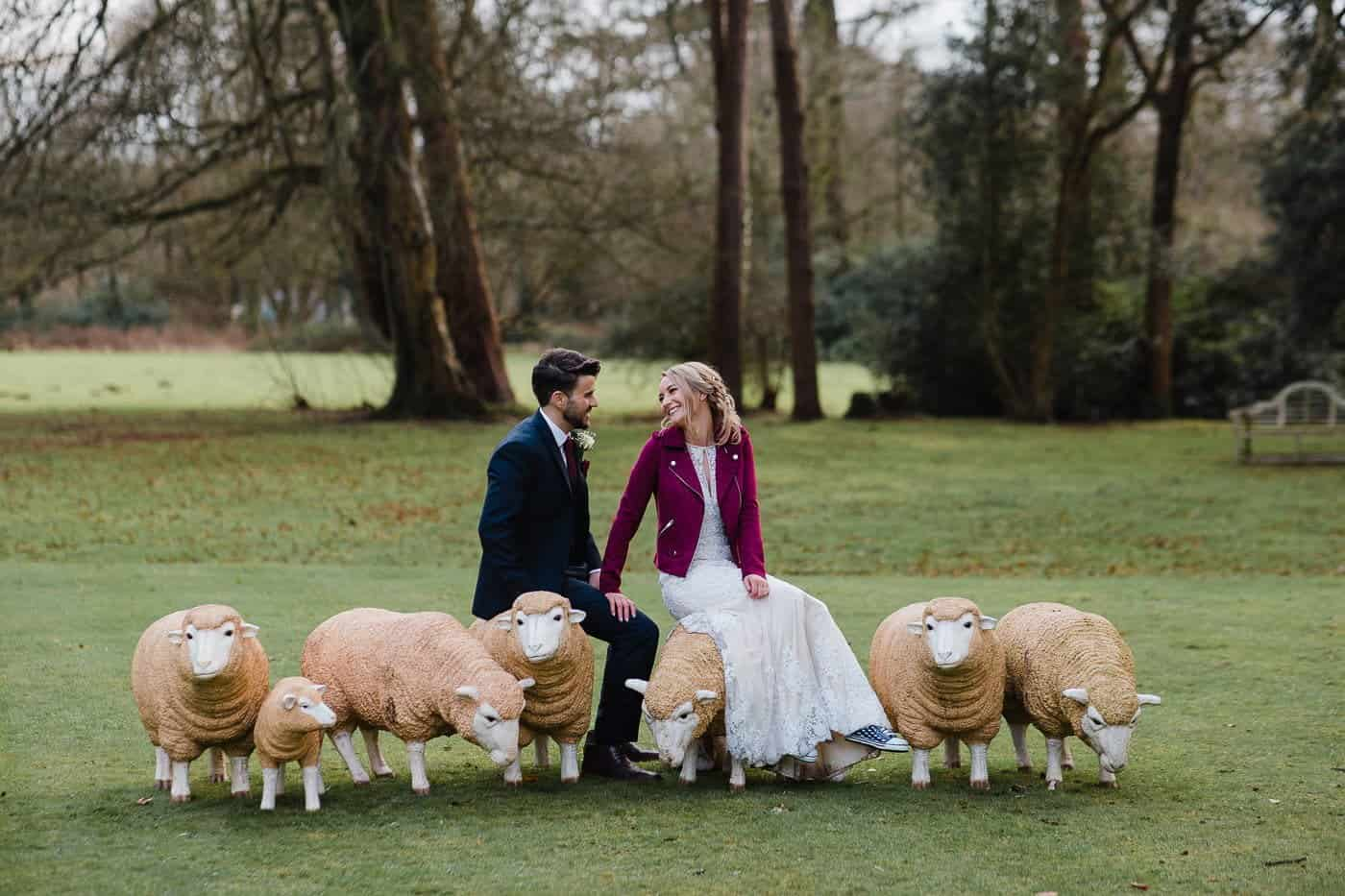 bride and groom sitting on sheep