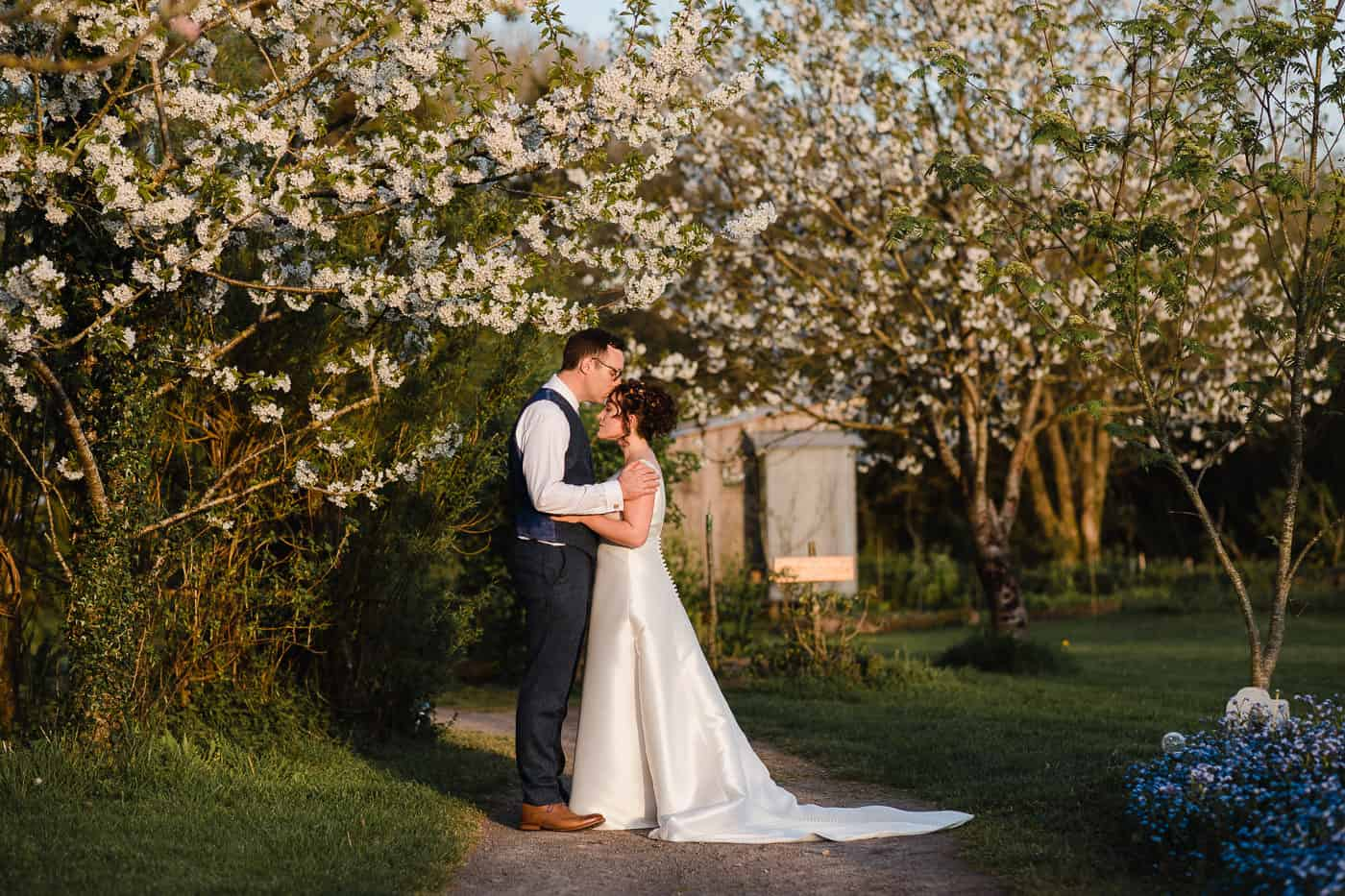 groom kissing brides forehead under tree at sunset at Coed Hills